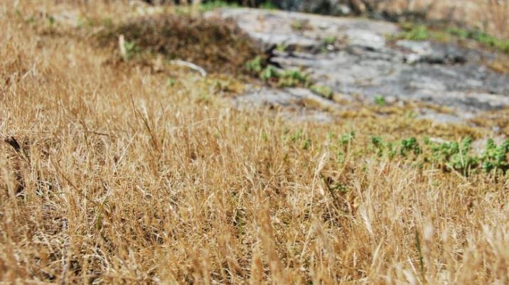 省府稱,一些地區已列為4級乾旱。CBC