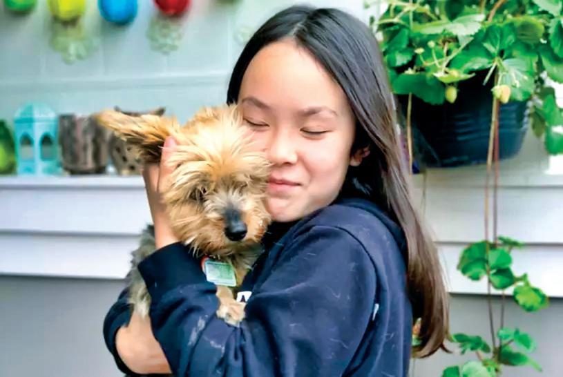 ■華裔女童士嘉堡遛狗遇郊狼,英勇小狗護主受傷。CityNews/關女士