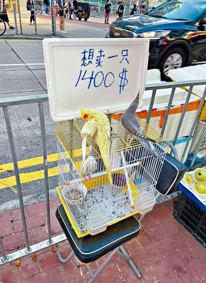 水果店外有三隻鸚鵡,雀籠上擺放一塊寫有價錢的發泡膠蓋。