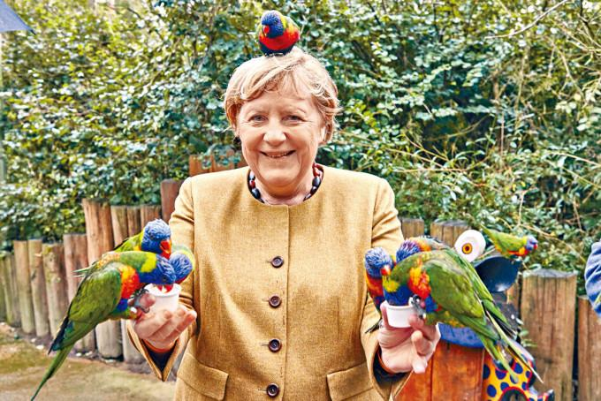 即將卸任的總理默克爾,上周四抽空到雀鳥公園餵雀。