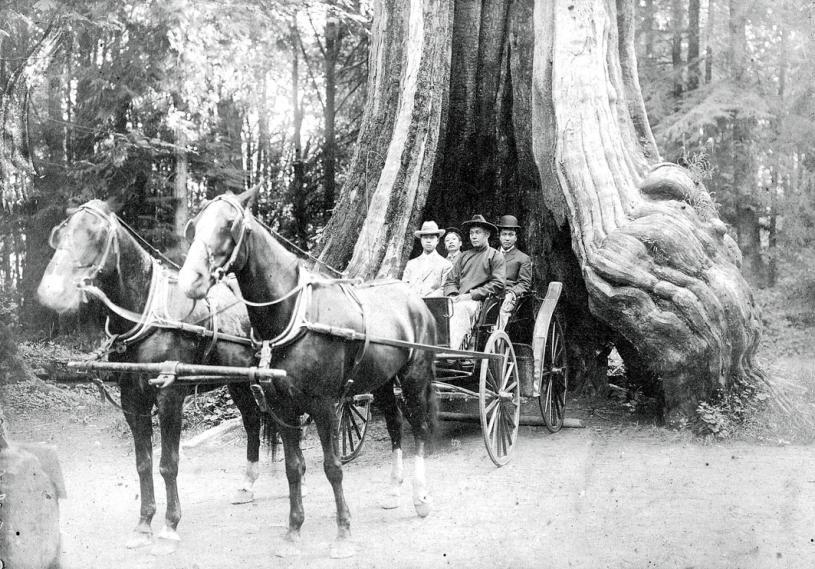 陳才(前排右)與友人坐馬車遊史丹利公園的空心樹。